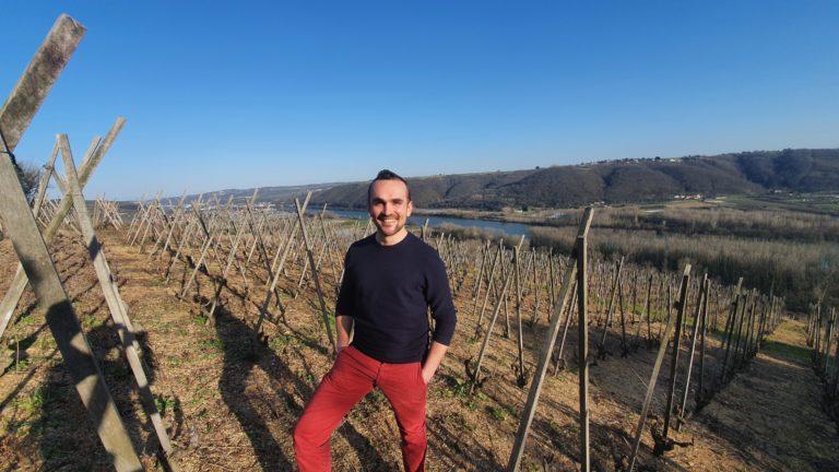 Guide œnologique dans les vignes